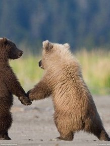 Animals who are totally BFFS