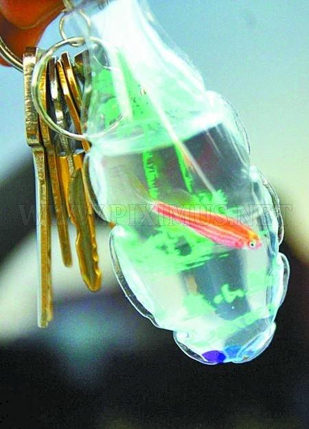 Strange Chinese Keychains