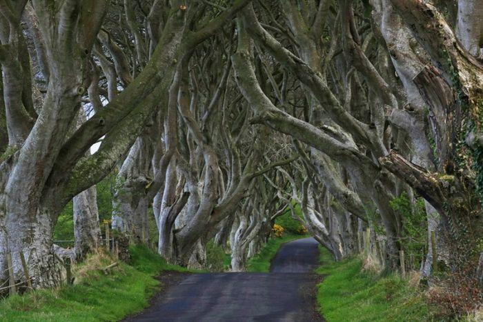Beautiful Road in Ireland