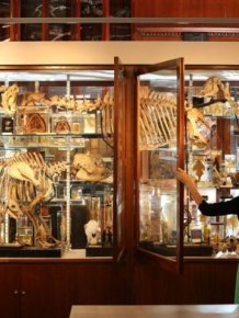 The Grant Museum of Zoology