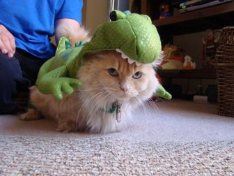 Animals Dressed Up As Dinos