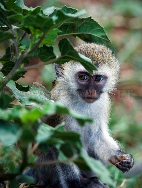 Wildlife Tanzania