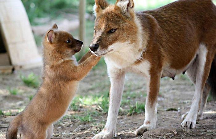 Cute Animals, part 9