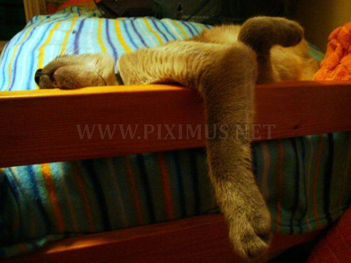 Cats in Awkward and Strange Positions