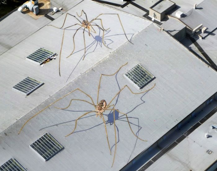 Daddy Long-Legs Overtake the Seattle Center Armory