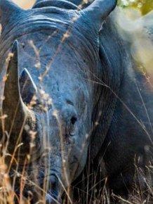Beautiful Wildlife Photos