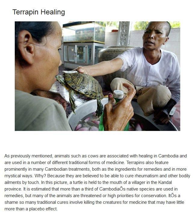 Bizarre Medical Treatments Involving Animals