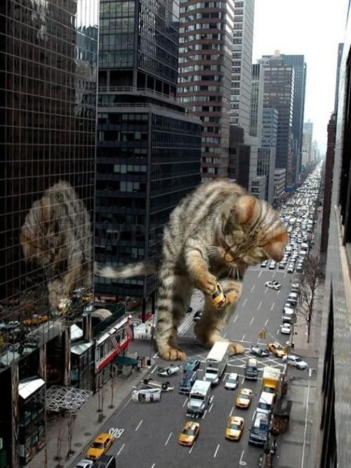 The World Will End With Catzilla Atack Fun