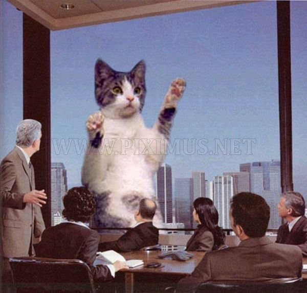 The World Will End With Catzilla Atack