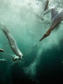 The Winners of British Wildlife Photography Awards 2012