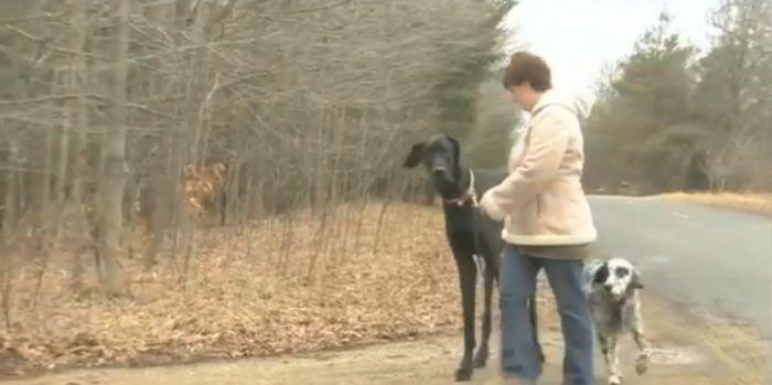 Zeus, the World's Tallest Dog