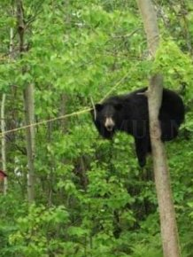 Bear Gets the Bird Feeder