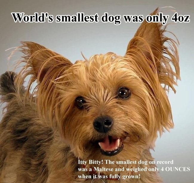 Unknown Dog Facts