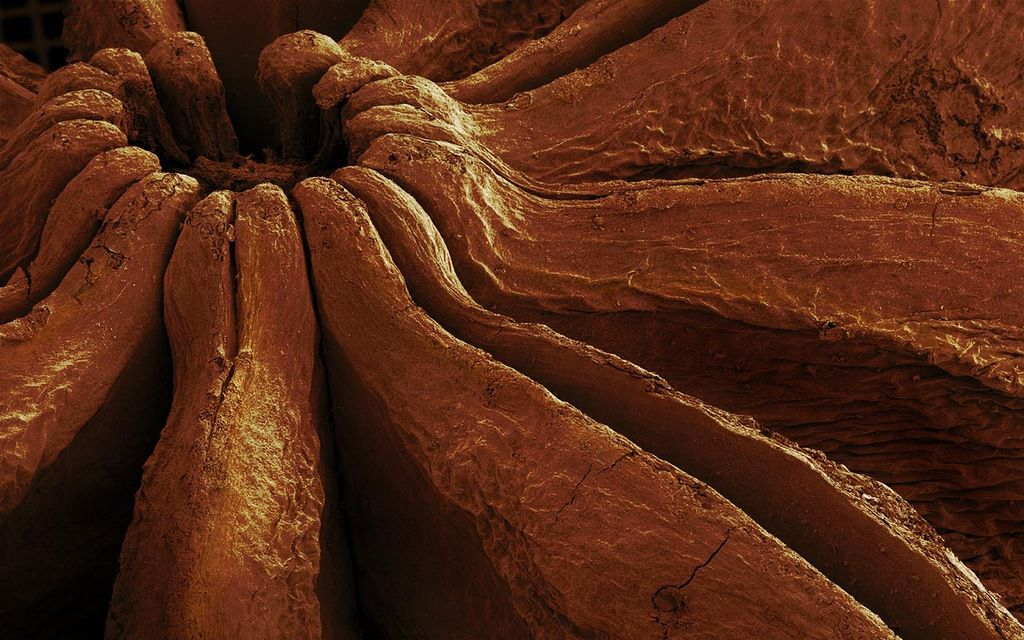 Food as It's Seen Through a Microscope