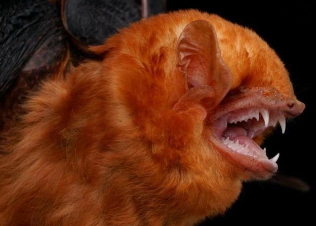 Diversity of Bats