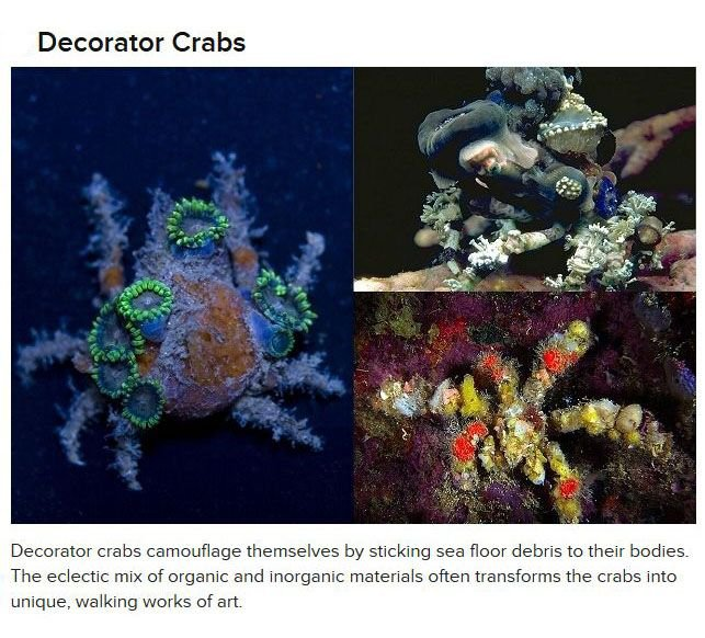 Amazing Things Created By Animals