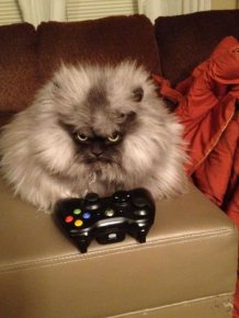 Colonel Meow is One Angry Cat