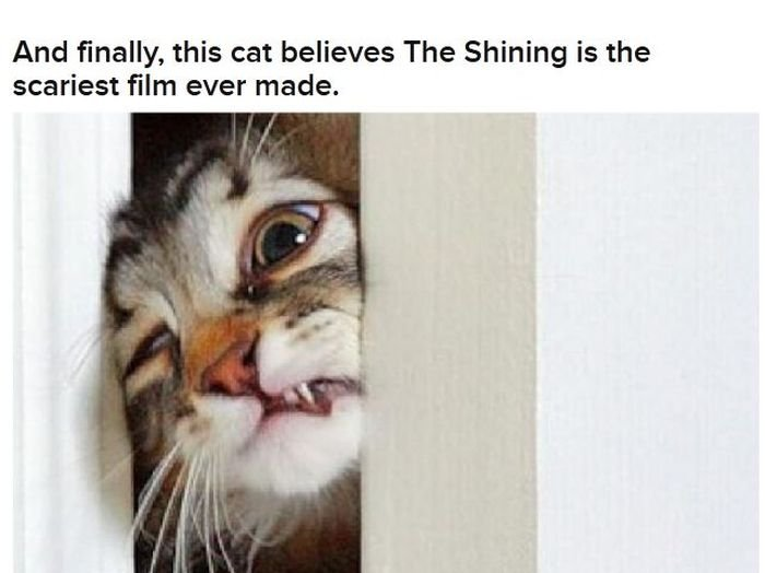 Cats Acting Out Their Favorite Movies