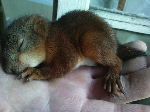 Belarusian Soldier Becomes Best Friend for Rescued Squirrel