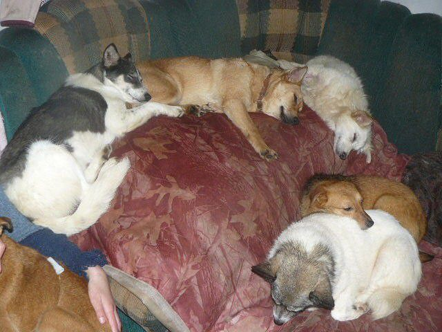 Woman Turned Her Home into Animal Shelter