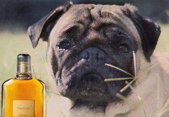 Tom Ford's 22 Essentials by Pugs
