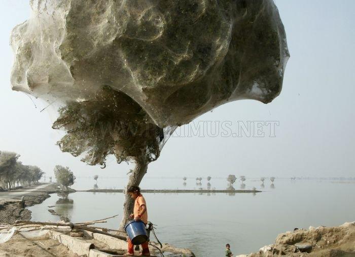 Spider Invasion in Pakistan