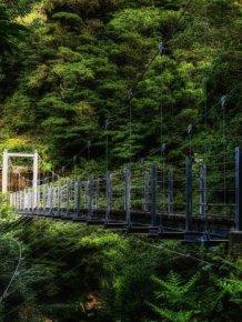 Beautiful Forest on Japanese Yakushima Island