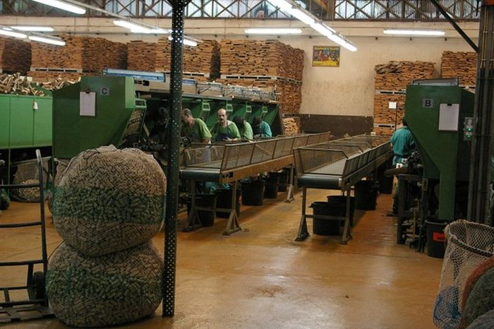 Production of Corks