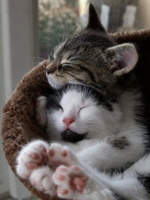 Hugging Kittens
