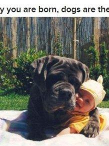 Why Dog Is Man's Best Friend