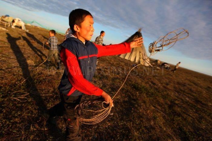 Siberian Deer Herders