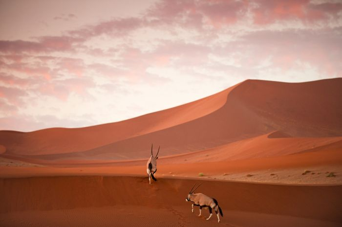 National Geographic Photo Contest 2012, part 2012