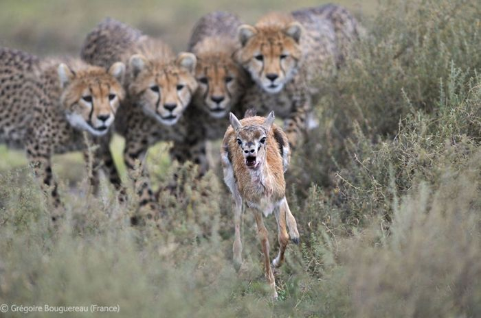 The Best Wildlife Photographs of the Year