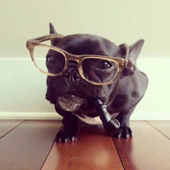 The Hipster French Bulldog Trotter
