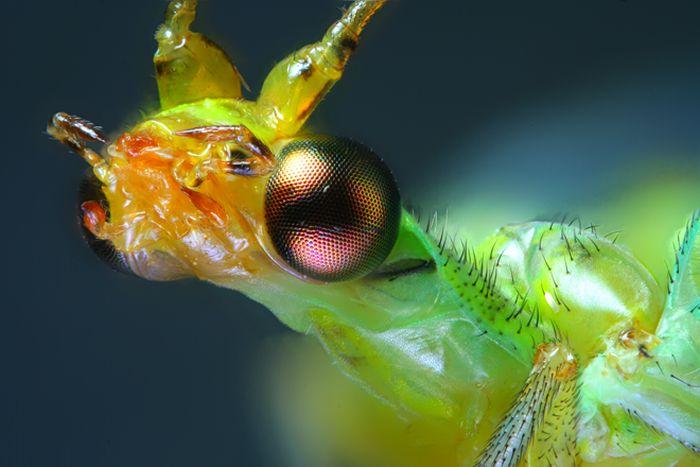 Creepy Microscope Close-Ups