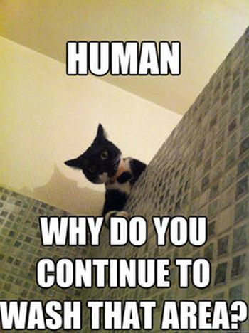 Incredulous Cat