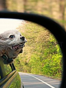 Funny Dog Faces at 50 MPH