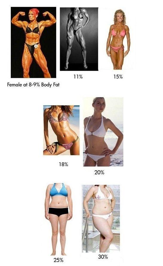 Body Fat Percentage Explained
