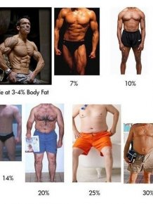 Body Fat Percentage Explained
