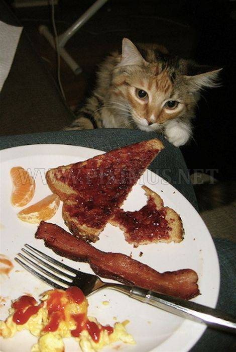 Cats and Bacon