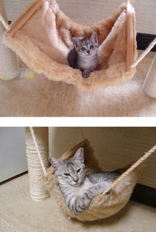 Cats Then And Now Animals