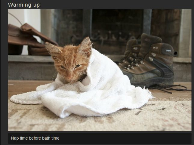 Recovery of a Kitten