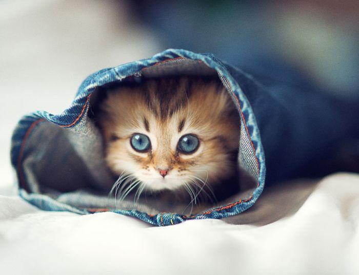 Very Cute Kitten
