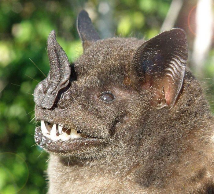 Bats in Peru