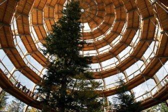 The Longest Tree Top Walk in the World