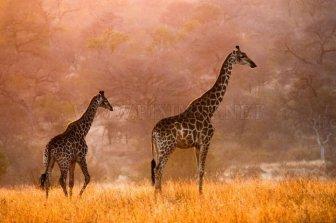 Beautiful Nature by Gorazd Golob