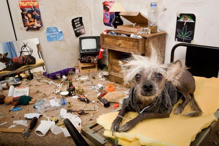 Funny Dog's Life