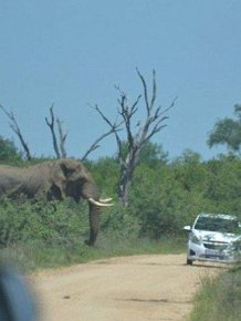 Elephant Who Hates Cars