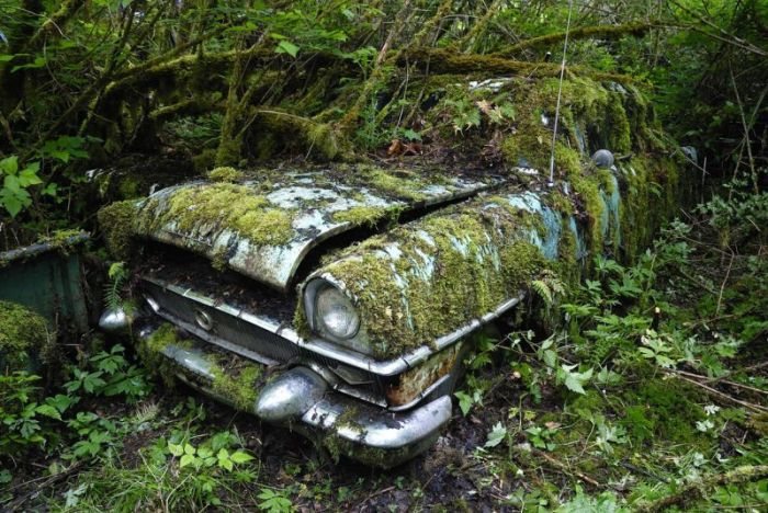 Car Cemetery in a Forest