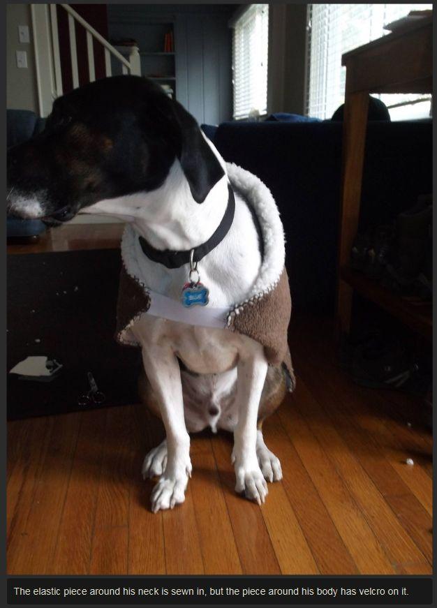 DIY Dog Backpack